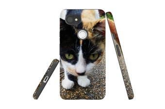 For Google Pixel 2 XL Case, Armour Back Cover, Curious Cat