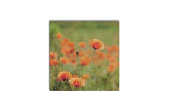 Faint Poppy Field, Square Canvas, Home Wall Decor Print
