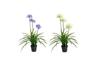 Potted Artificial 85cm Blue & White Agapanthus Plastic Flower Set Plant Decor