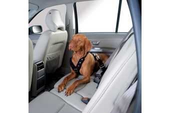 Hunter Easy Comfort Dog Car Harness w/ Seat Belt Attachment