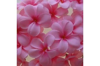 Pink Frangipani Fairy Lights on a 10 Metre Wire String - Wedding Party Decoration