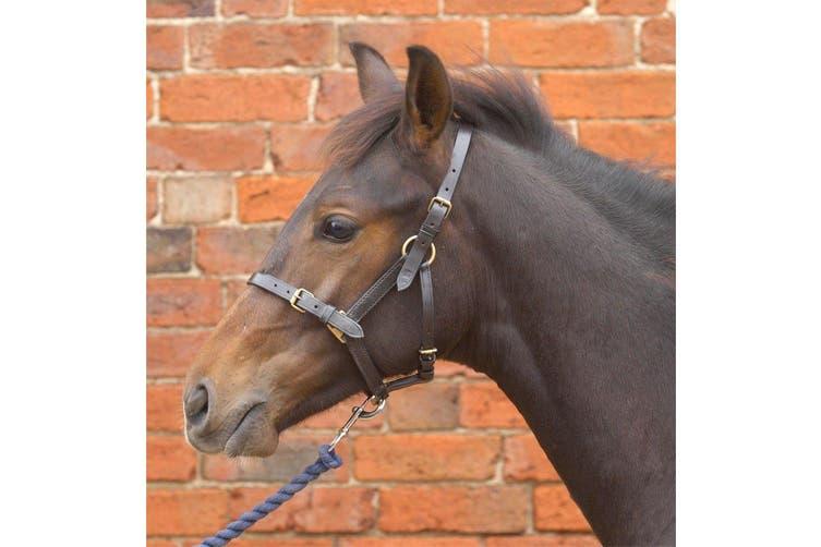 Hy Leather Foal Head Collar (Black) (Medium)
