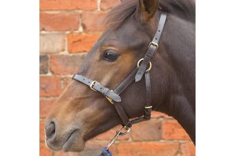 Hy Leather Foal Head Collar (Brown) (Small)