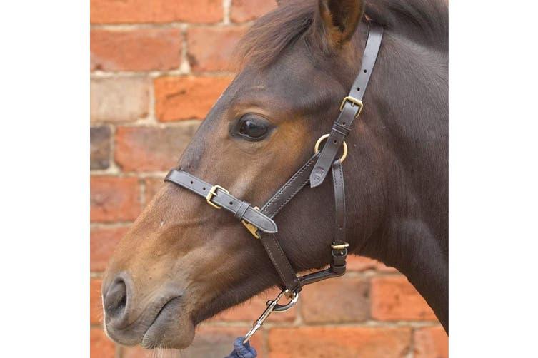 Hy Leather Foal Head Collar (Brown) (Medium)