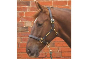 Hy Leather Head Collar (Brown) (Pony)