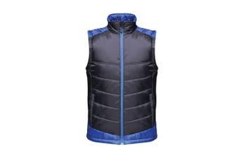 Regatta Mens Contrast Insulated Bodywarmer (Navy/New Royal Blue) (4XL)
