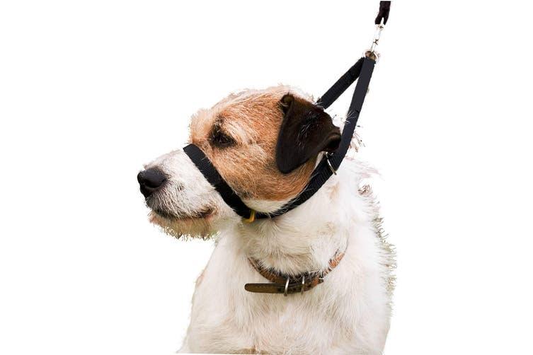 Canny Dog Training Collar (Black) (3)