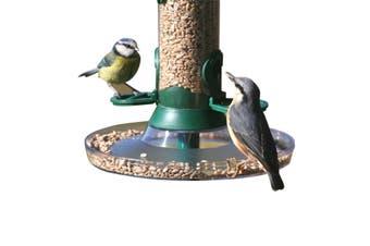 C J Catcher Bird Feeding Tray (Clear) - UTVP1231