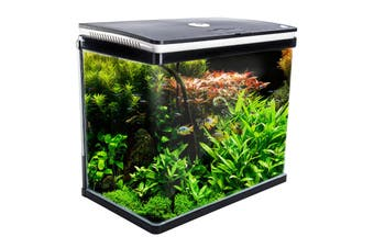 52L Curved Glass RGB LED Aquarium Fish Tank