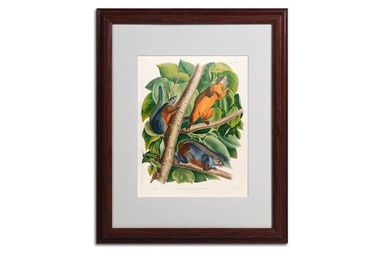 (41cm  by 50cm ) - Trademark Fine Art Red-Bellied Squirrel Matted Artwork by John James Audubon with Wood Frame, 41cm by 50cm