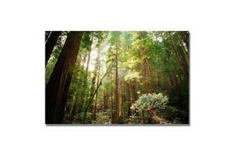(60cm  by 80cm ) - Trademark Fine Art Muir Woods by Ariane Moshayedi Canvas Wall Art, 60cm x 80cm