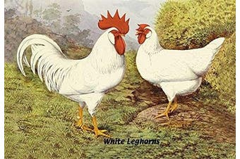 "Buyenlarge 0-587-05643-6-P1218 ""White Leghorns"" Paper Poster, 30cm x 46cm"