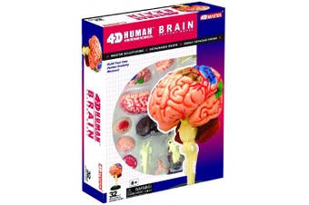 Human Brain Anatomy Model - Build your Own!