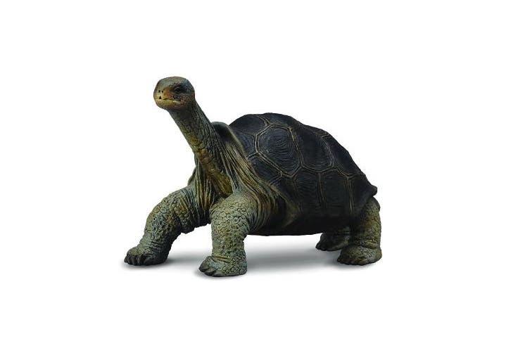 CollectA Pinta Island Tortoise Figure