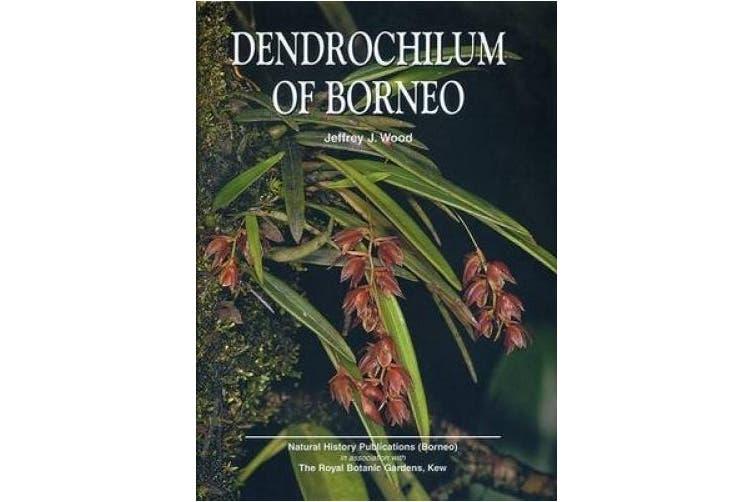 Dendrochilum of Borneo