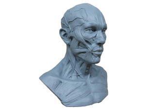 (Blue) - Human Model Craft Anatomy Skull Head Muscle Bone Medical Artist Drawing Study (Blue)
