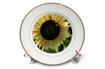 (20cm ) - 3dRose Golden Sunflower, Porcelain Plate, 20cm