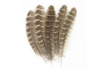 (Pheasant Wing Quill) - ALL in ONE Natural Feather for DIY Craft (Pheasant Wing Quill)