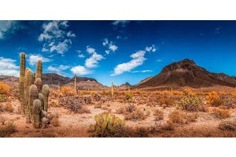 (36cm  x 90cm ) - Reptile Habitat, Terrarium Background, Blue Sky with Mountains & Cactus - (Various Sizes)