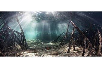 (60cm H x 90cm W) - Mangrove with Sunlight / Aquarium Background Fish Tank Background (Various Sizes)