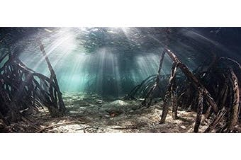 (60cm H x 180cm W) - Mangrove with Sunlight / Aquarium Background Fish Tank Background (Various Sizes)