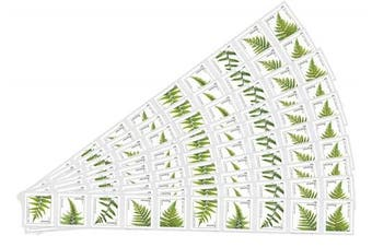 (100 Stamps) - Strips of 10 Ferns USPS Forever Postage Stamps featuring a close up photograph of five different species of fern (10 Strips of 10 Stamps)