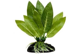Betta Plant, Amazon Sword By Blue Spotted - Great For Betta Fish and Use With Blue Spotted Betta Leaf Pad & Betta Log