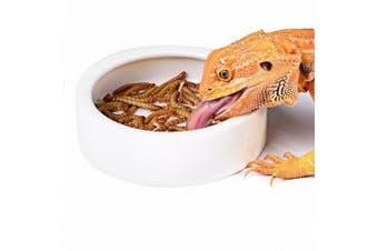 (M) - OMEM Worm Dish Mini Reptile Food Bowl Ceramics Made