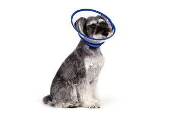 (XS, Velcro Closure: Blue) - Alfie Pet by Petoga Couture - Zumi Recovery Collar with Soft Edge (for Dogs & Cats)