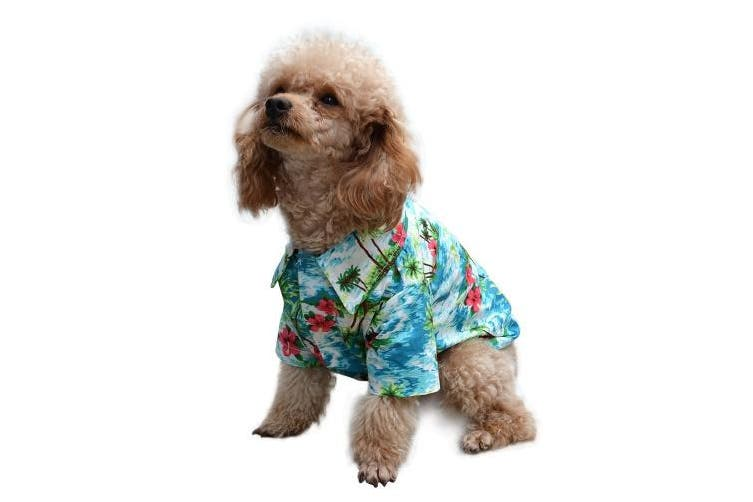 (M) - EXPAWLORER Hawaiian Pet Dog Polo T Shirts Cute for Small to Medium Puppy Cats Cool Summer Custom Vest