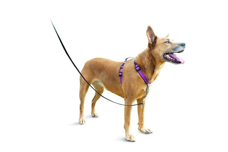 (Medium, Plum) - PetSafe 3in1 Harness, from The Makers of The Easy Walk Harness