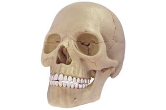 4D Master 26086 Human Anatomy Exploded Skull Model 3D Puzzle, One Colour