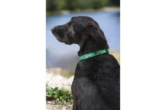 """(16-28"""", Tail Feathers) - Lupine Tail Feathers Patterned Adjustable Dog Collar for Large Dogs, 2.5cm /41cm - 70cm"""