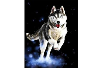 (Wooden Framed, Husky) - ABEUTY DIY Paint by Numbers for Adults Beginner - Husky Starry Sky Lovely Dog 41cm x 50cm Number Painting Anti Stress Toys (Wooden Framed)