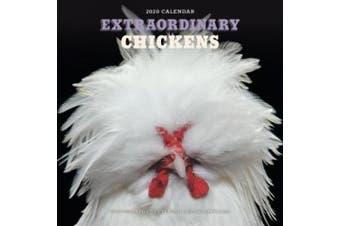 Extraordinary Chickens 2020 Wall Calendar