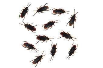 12- Fake Roaches Prank - Cockroach Bugs Look Real
