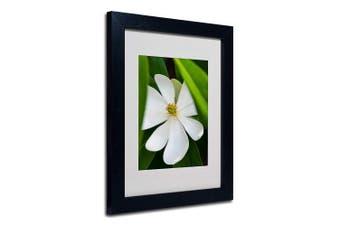 (11x14) - Magnolia by Kurt Shaffer, Black Frame, 28cm by 36cm