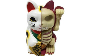4D Masters Fortune Cat Anatomy