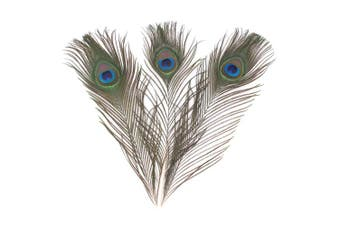 "(20) - Real Natural Peacock Eye Feathers 10-12"" (25~30cm) Great Wedding Christmas Halloween Decorations House Decoration (20)"