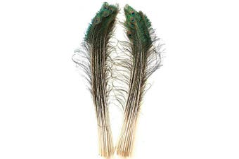 (Natural) - American Feathers Peacock Swords with Eyes 80cm - 90cm (Natural)