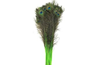 (Lime Green) - American Feathers Eyed Peacock Tail Feathers 80cm - 90cm Dyed - per 25 (Lime Green)