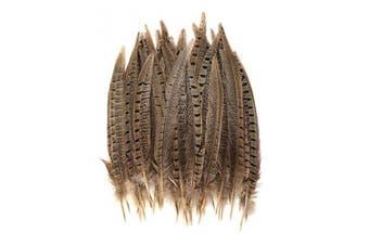 Ringneck Pheasant Tail Feathers 20cm - 25cm per 50