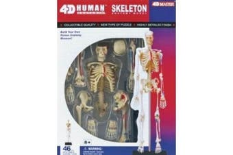 4D VISIONS MODELS Visible Human Skeleton Anatomy Kit, One Colour by 4D VISIONS MODELS