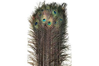 (25) - American Feathers Eyed Peacock Tail Feathers 80cm - 90cm (25)
