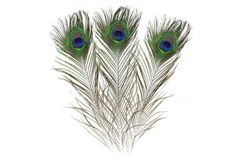 (20) - Real Natural Peacock Feathers 16-18 inches (40~45cm) Great Wedding Christmas Halloween Decorations House Decoration (20)