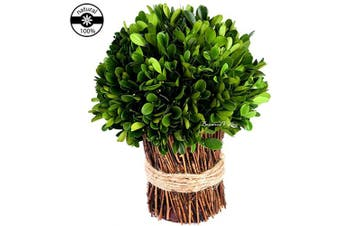(33cm , Half Ball Bundle) - Preserved Boxwood Globe New Shape Design Use as Bouquet or Boxwood Ball in Delicate Vase for DIY or Decorative Purposes Farmhouse Decor (Bouquet, 33cm high)
