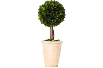 (41cm , Single Ball Topiary) - Real Preserved Boxwood Evergreen Globe Tree Topiary in Terracotta Planter Green Plant for Home Decor (Single Ball Topiary, 41cm Tall)