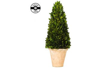 (43cm , Cone Topiary) - Preserved Boxwood Cone Topiary Original Natural Boxwood Christmas Decor Plant(Cone Tree Topiary, 43cm high)