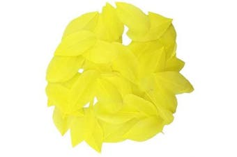 (Yellow) - Celine lin 100 PCS Exquisite Leaf Goose Feathers For DIY Art,Home Party or Wedding 2-3.2inch(5-8cm),Yellow