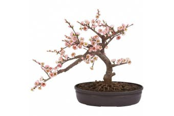 (Pink) - Cherry Blossom Bonsai Silk Tree